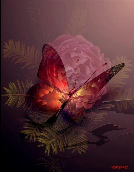 beautiful-butterfly.jpg