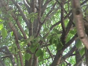 park tree trunk