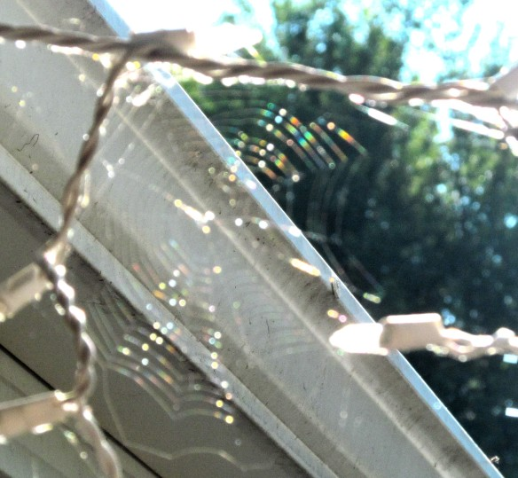 Spider Web I Saw This Morning