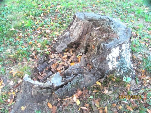 tree trunk2