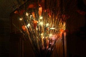 lights 2014