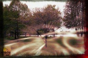 tree pavilion
