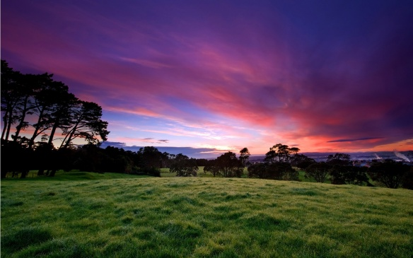grassland_under_pink_sky-1440x900