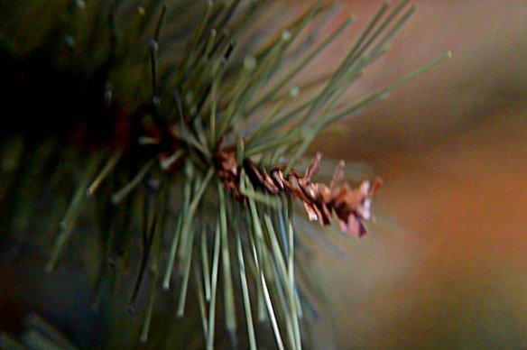 christmas shot 3