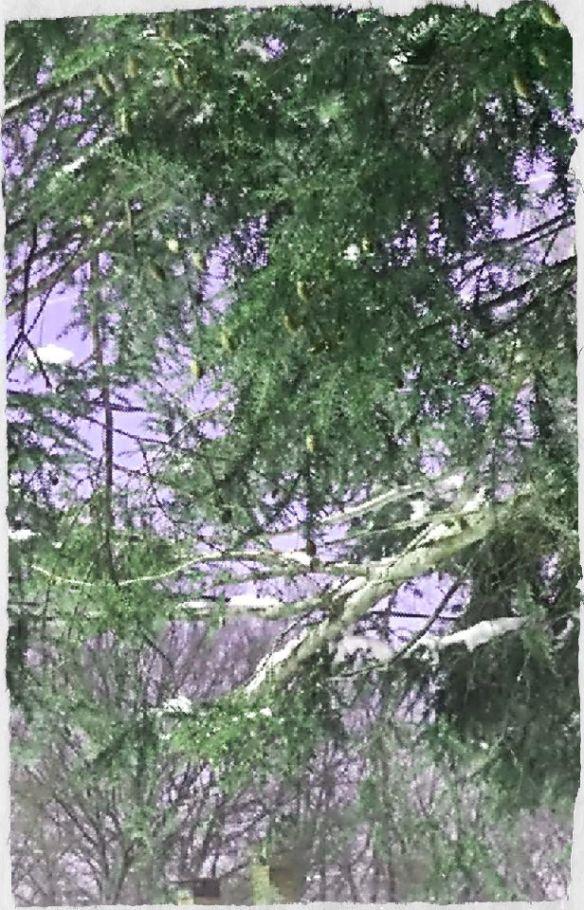 green tree 5