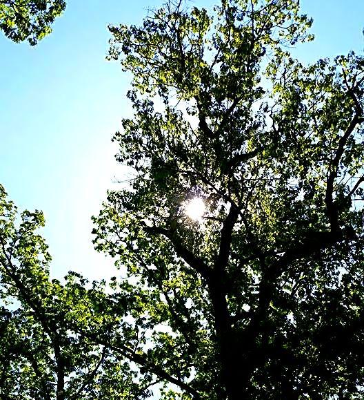 sunbright