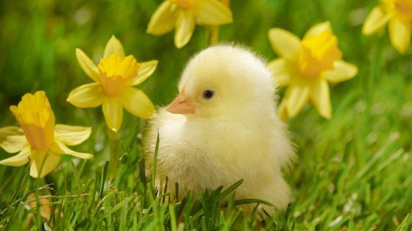 spring-season